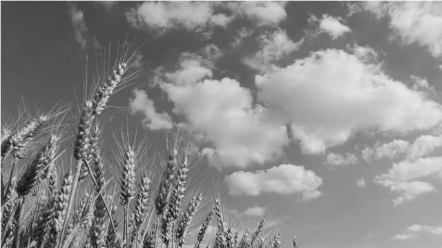 Agroalimentaire - Secteur KLB Group